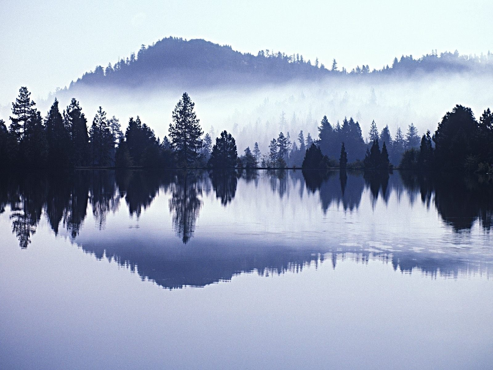 Forest Water Trees Fog Mist Mountain Morning Lake Trout Picture Landscape Photography Landscape Pictures Beautiful Landscape Photography Hd wallpaper morning lake trees fog