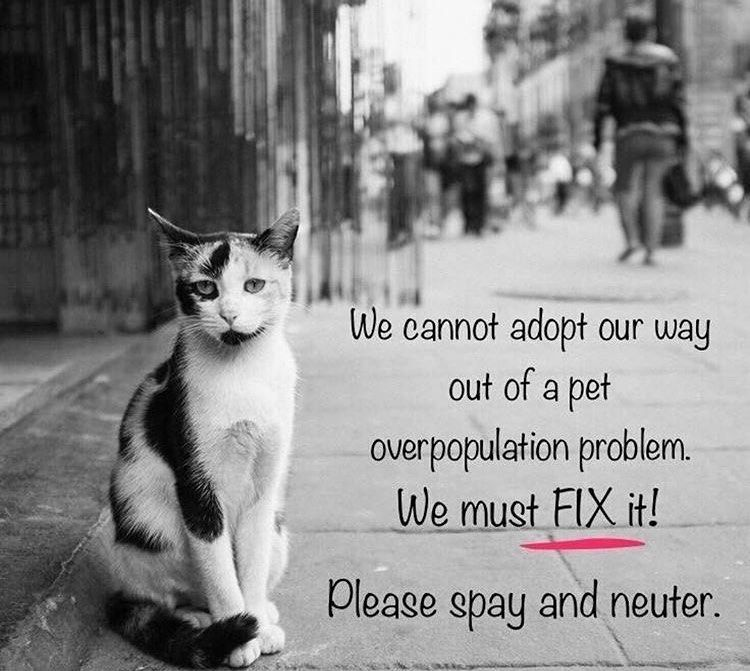 Tnr Is The Only Solution And The Humane Solution Tnrq