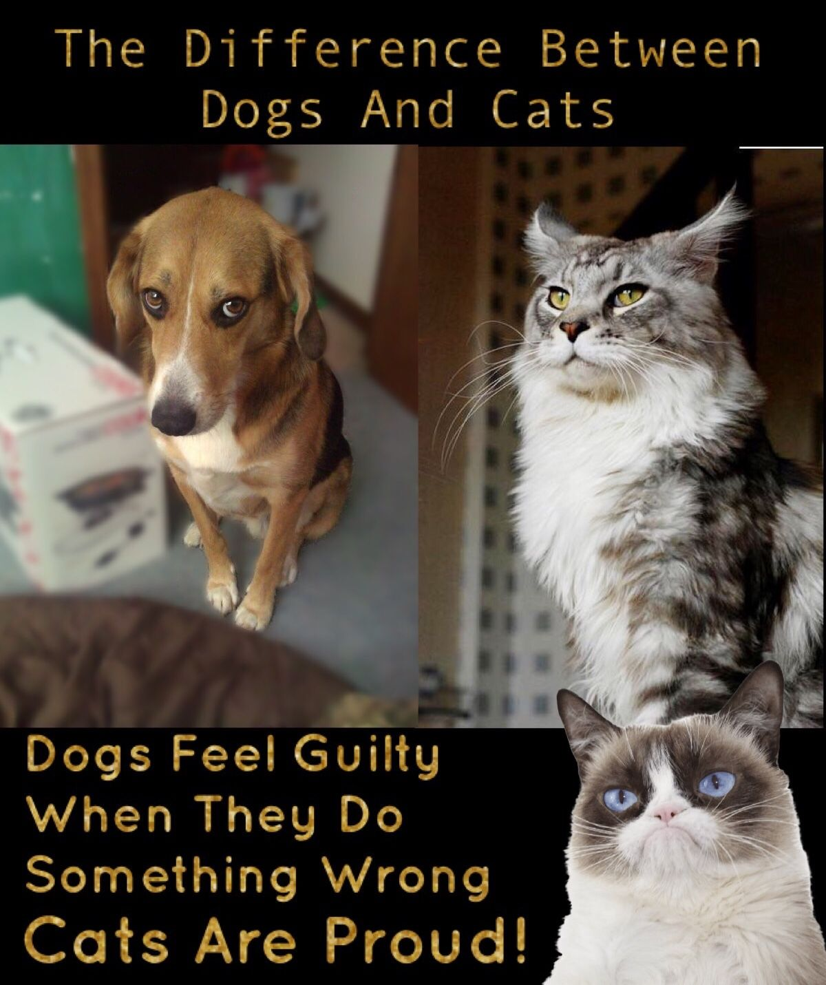 Grumpy Cat The Difference Between Dogs And Cats Funny Cat Memes Dog Cat Cute Funny Animals