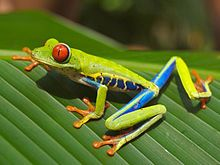 Wiki article on the wildlife of Costa Rica