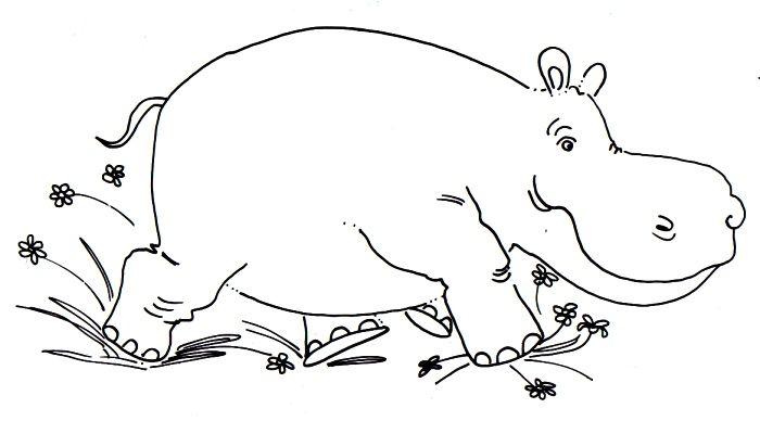 Hipopotamo Corriendo Hipopotamos Dibujo Dibujos Dibujos Para