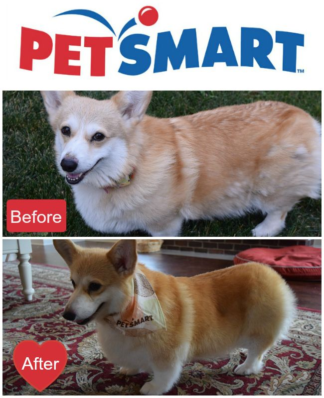 Eve S Special Spa Day With Petsmartgrooming Spa Day Pets Petsmart Grooming