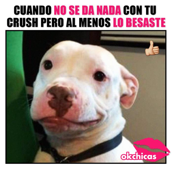 20 Divertidos Memes De Perros Que Te Haran Llorar De Risa Humor Divertido Sobre Animales Imagenes Divertidas De Animales Memes Perros
