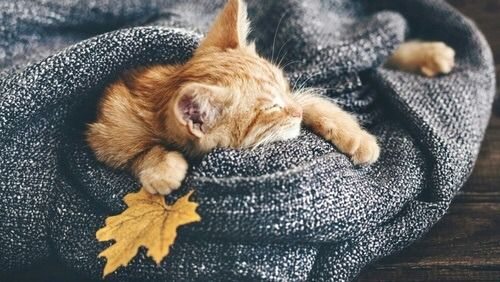 Live your Dream #gingerkitten