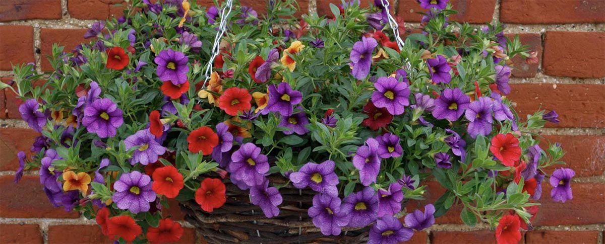 https://atificialflowers.wordpress.com/2017/07/15/artificial-hanging-baskets/  #artificialflowers #artificialhangingbaskets