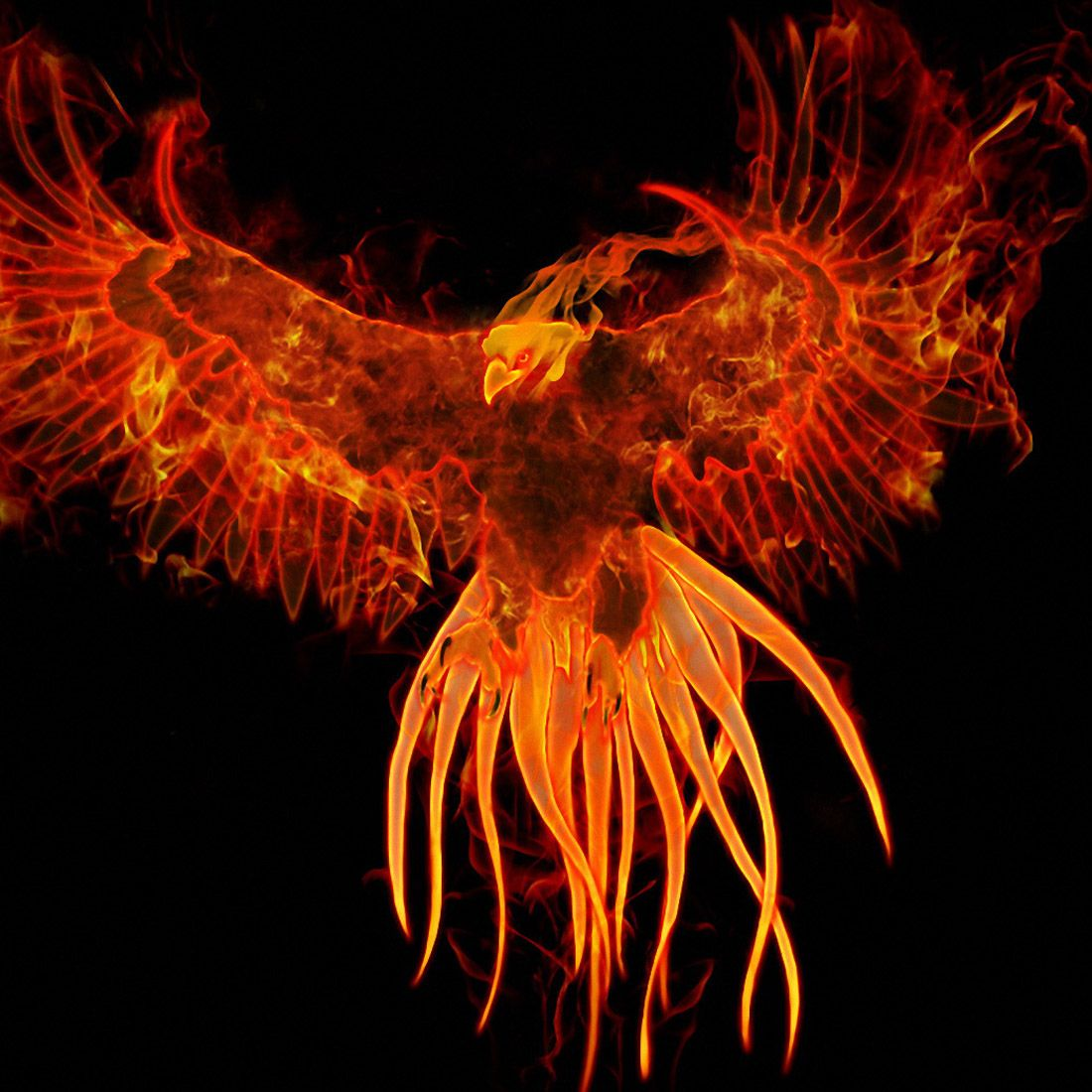 Phoenix Wallpaper 248 Phoenix bird, Phoenix wallpaper