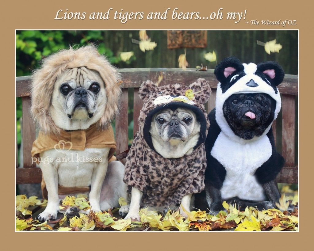 Oliver Clara Riley Lions Tigers Bears Costumes Halloween By Pugs