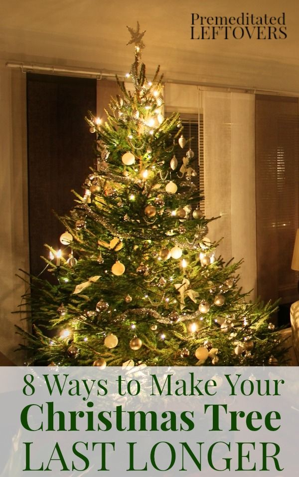 Looking for ways to Make Your Christmas Tree Last Longer? These ...
