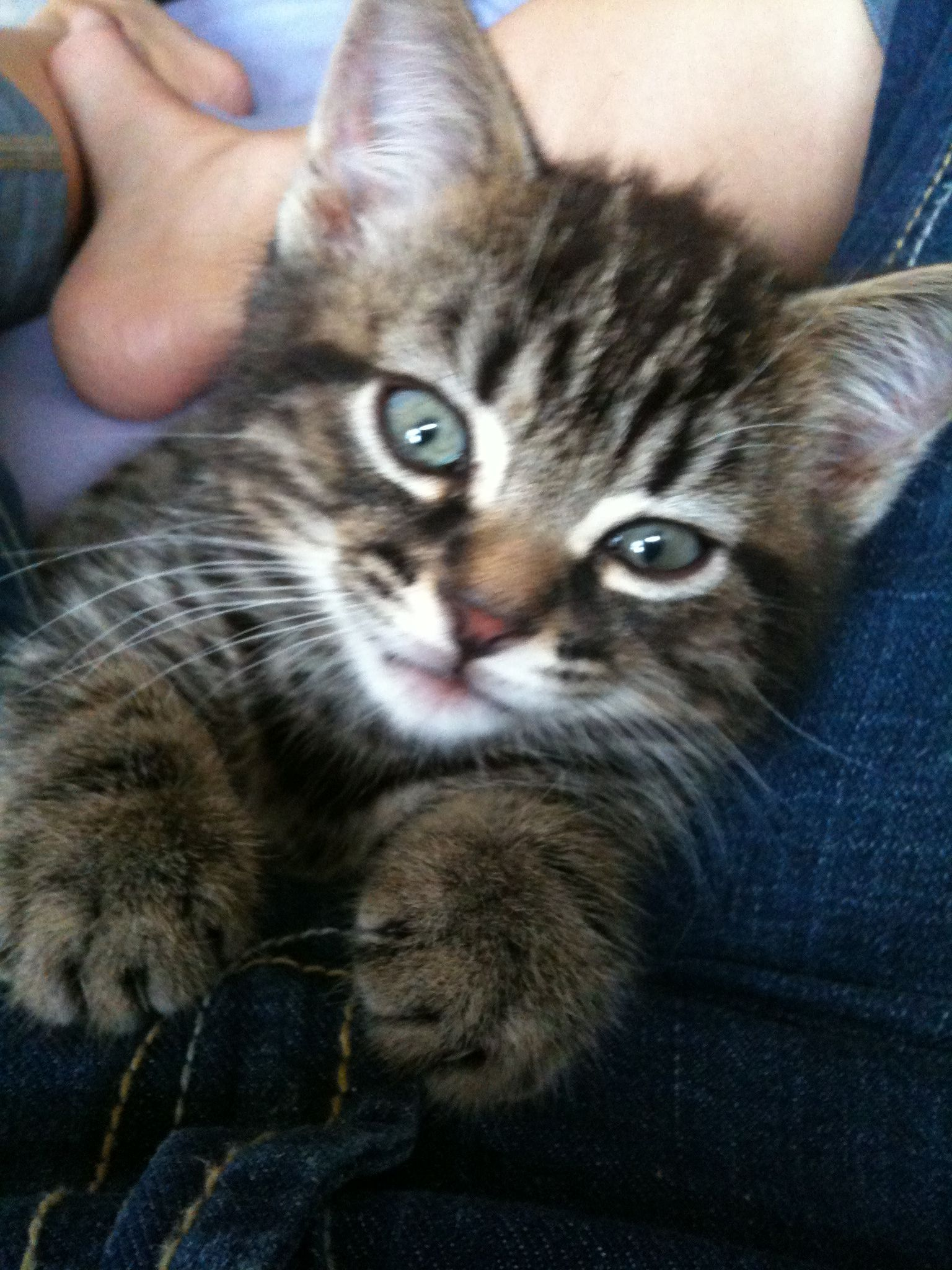oh my goodness this is the cutest kitty ever