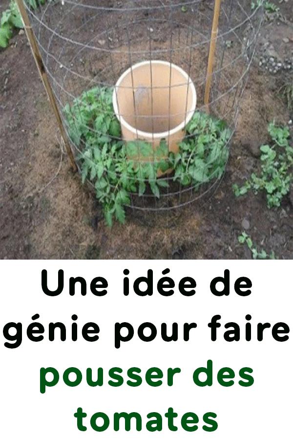une id e de g nie pour faire pousser des tomates jardin. Black Bedroom Furniture Sets. Home Design Ideas