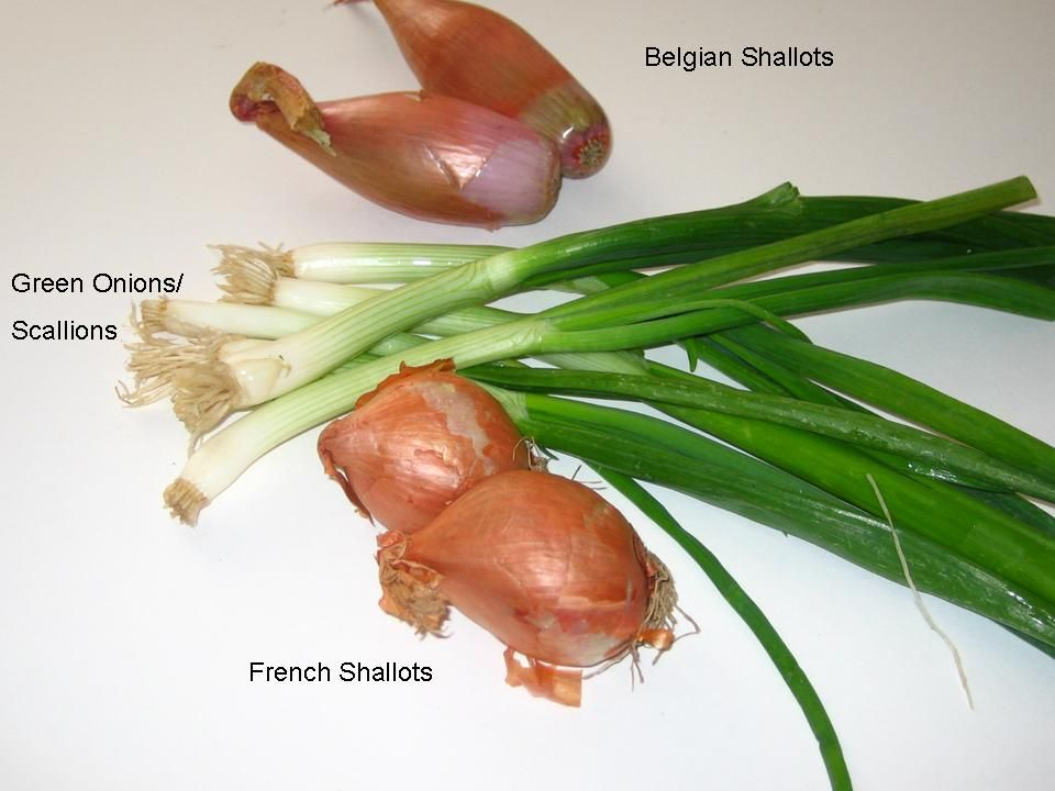 Shallots Vs Scallions Vs Green Onions Shallots Scallion Food