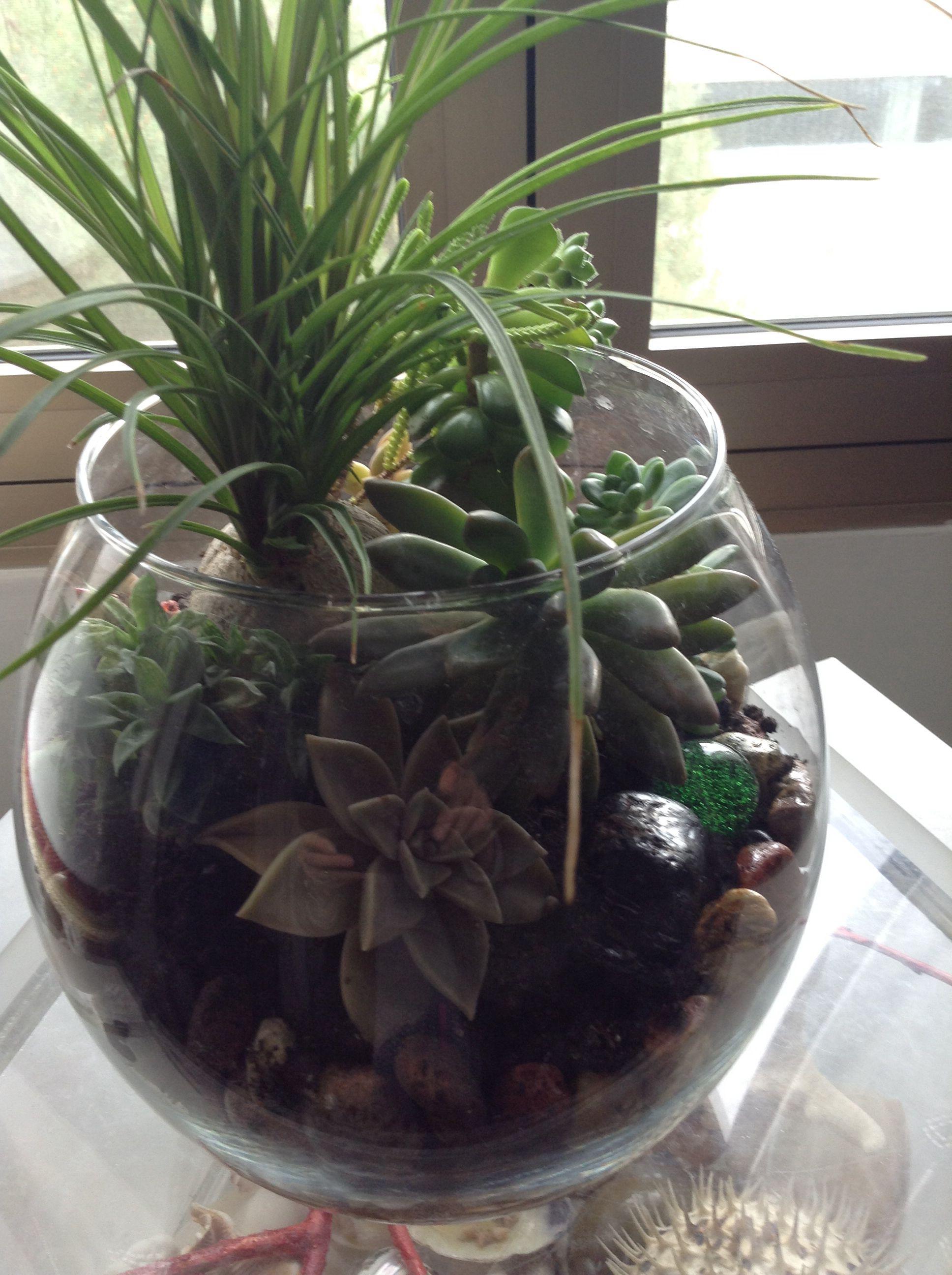Piante Da Regalare A Pasqua composizione di succulente con sassi colorati delle isole