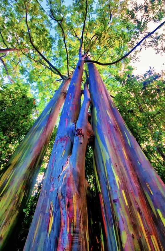 Stunning Multi Colored Tree That Shows Brightly Different Colored