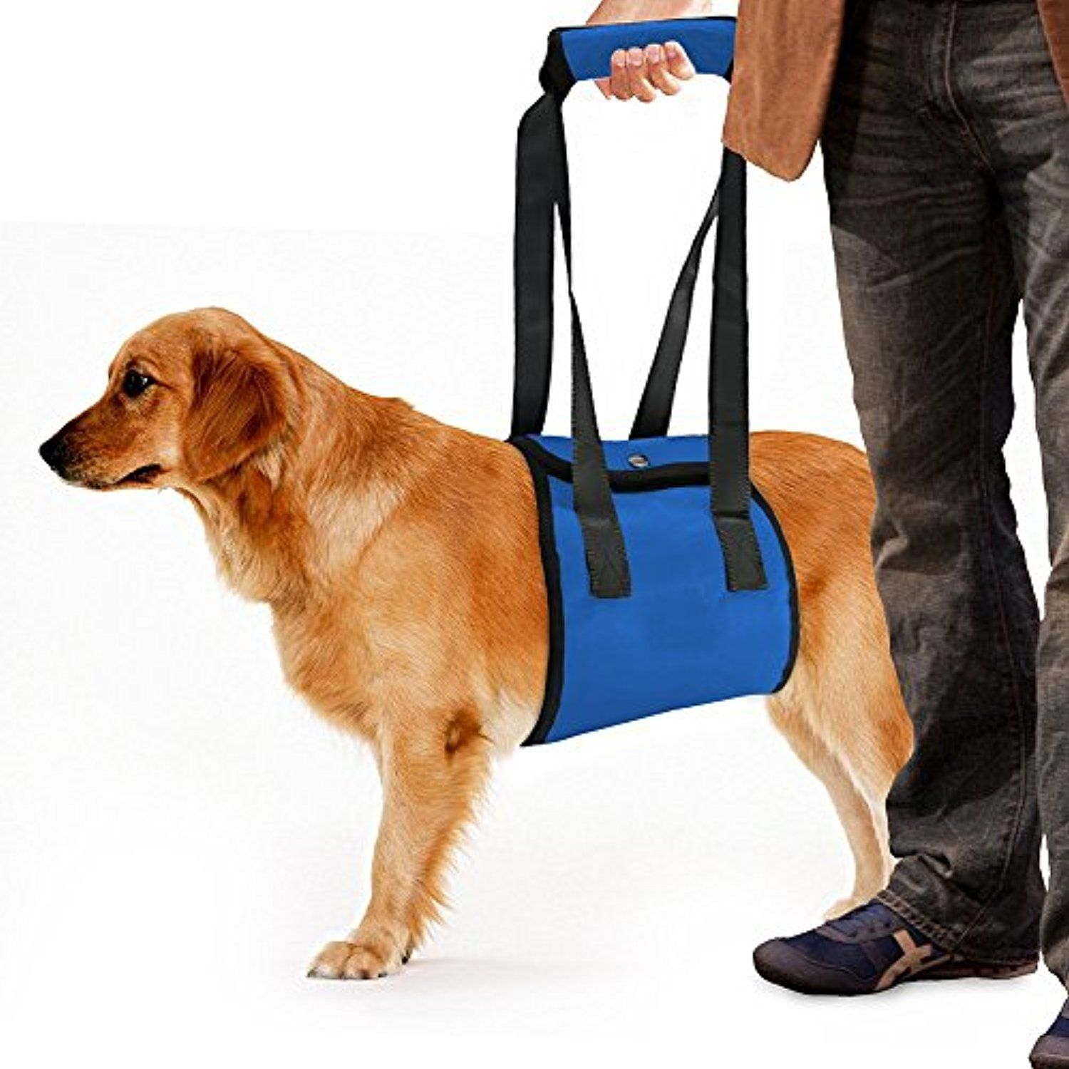 Blue Dog Lift Harness With Handle Auxiliary Belt For Xl Large