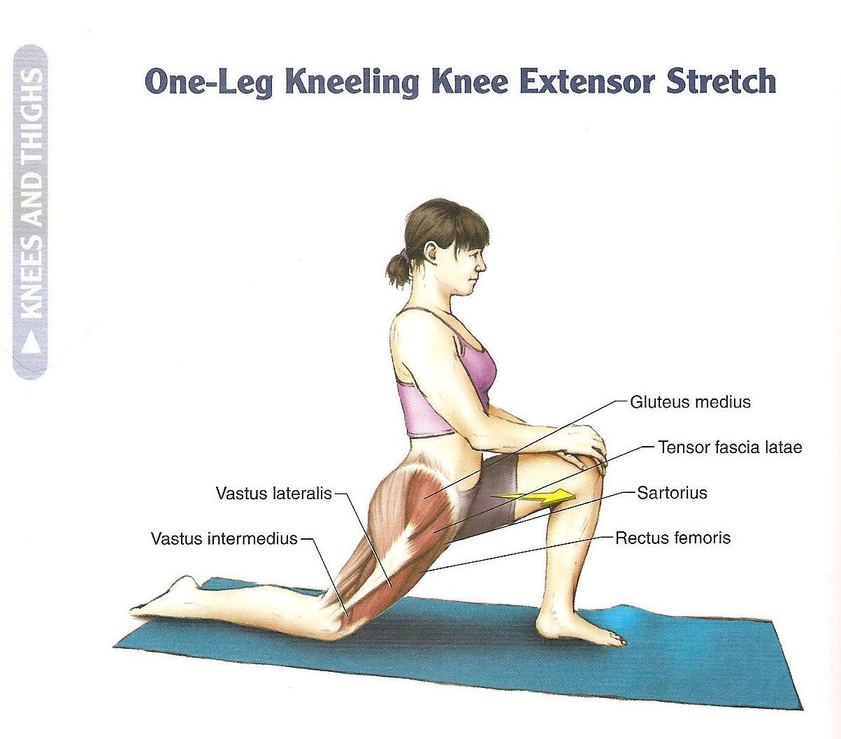 37++ Stretch hip flexor muscles inspirations