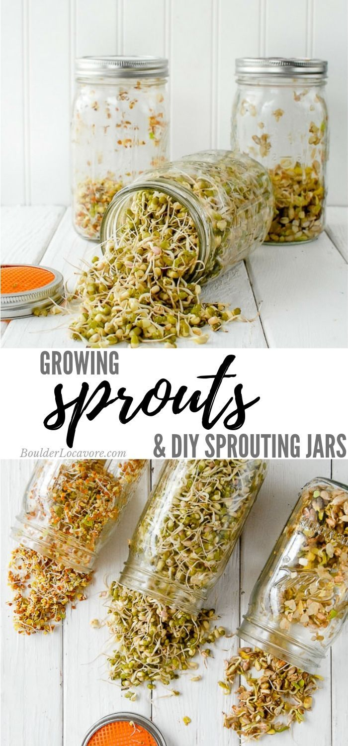 Growing Sprouts images