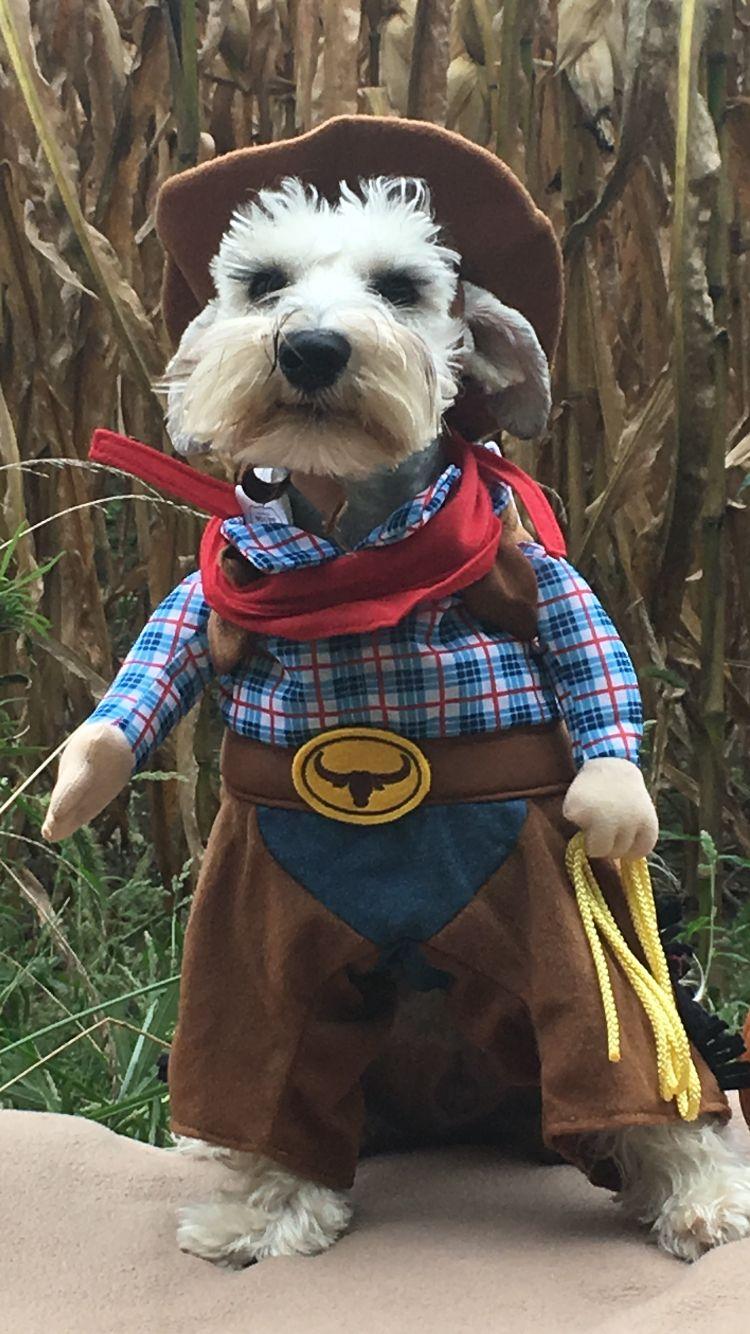 Perrito con disfraz de vaquero♡ Disfraz para perros
