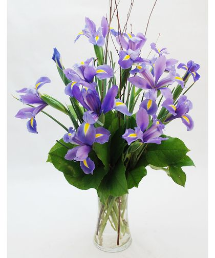 Iris In Bloom Beautiful 15 Stems Of Vibrant Blooming Iris In A Natural Free Style Design Fills This Clear Glas Flower Delivery Purple Iris Flower Arrangements