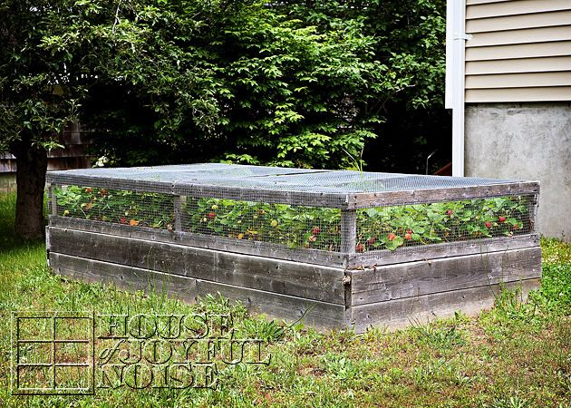 Strawberry bed with bird netting frame | Vegetable Garden ...