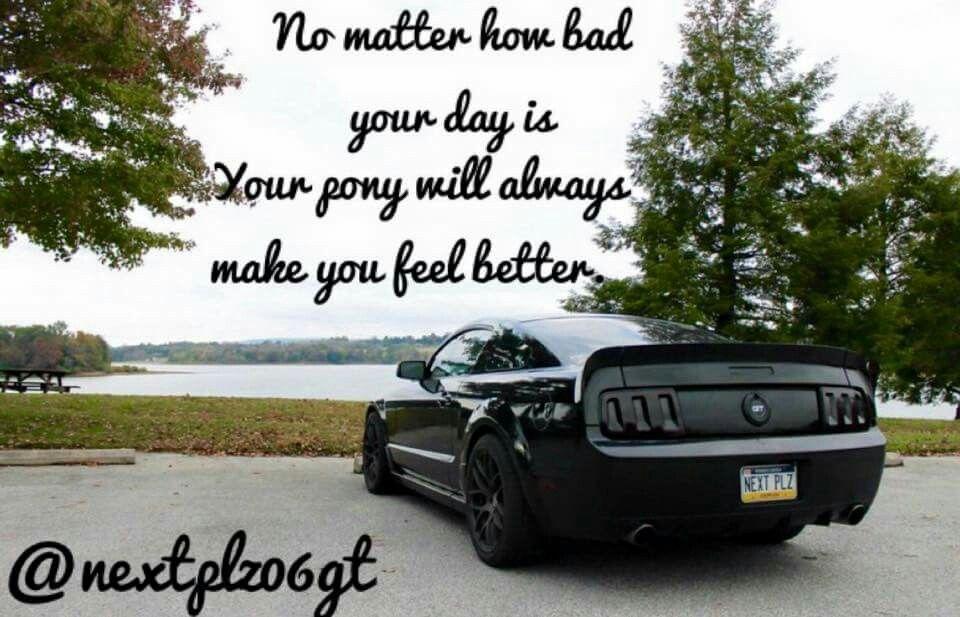 For Mustang Monday Mustang Quotes Mustang Humor Mustang Meme