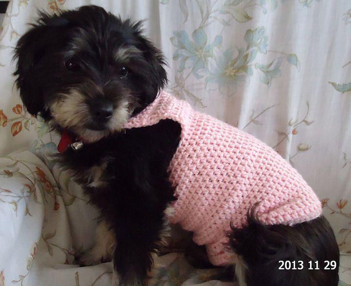 Free Dog Sweater Crochet Pattern Crochet For The Doggies
