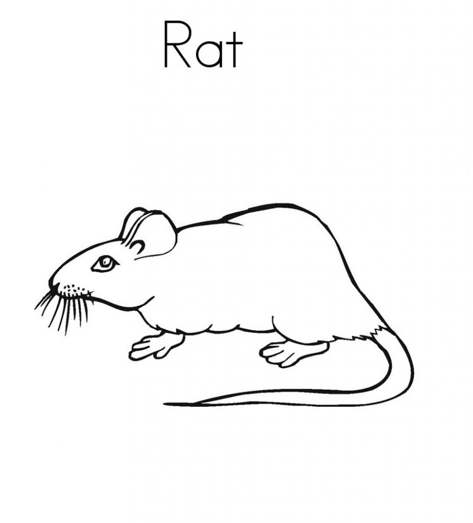 Free Printable Rat Coloring Pages For Kids Bunny Coloring Pages Cute Coloring Pages Animal Coloring Pages