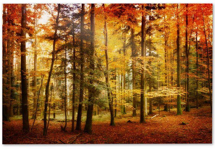 Philippe Sainte-Laudy Brilliant Fall Color 22\\\