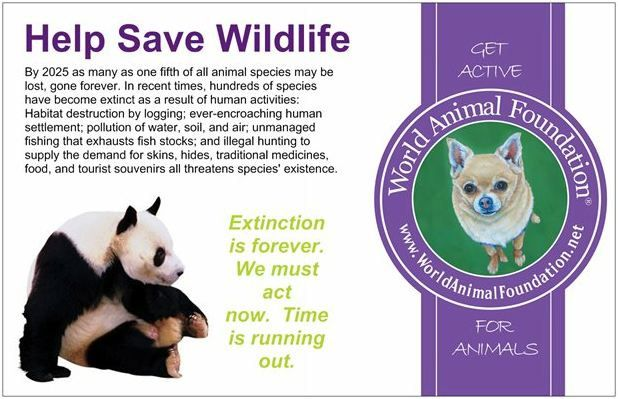 everything you need to know about saving wildlife good reads everything you need to know about saving wildlife good reads save wildlife wildlife and extinct