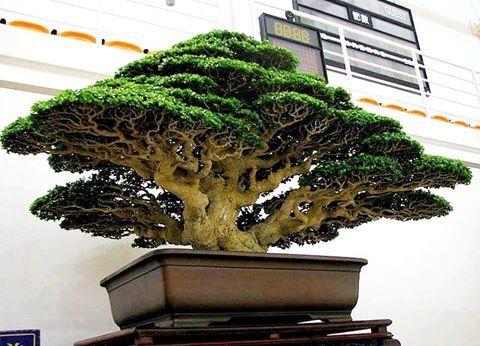 Pin On Bonsai Tree Basics With Examples