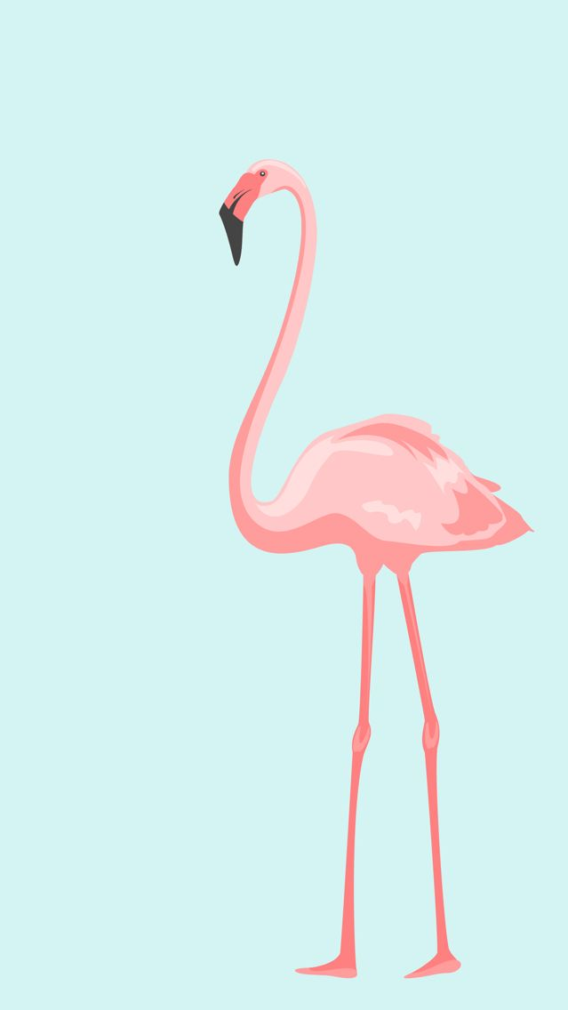 Flamingo Find More Cute Iphone Android Wallpapers And