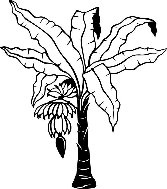 Banana Tree Drawing - ClipArt Best   Tree drawing, Leaf ... (694 x 784 Pixel)