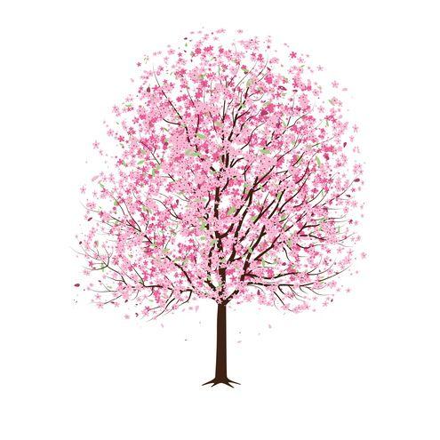 Pink Cherry Blossom Tree Vector Bunga Sakura Seni Cat Air Bunga Peony