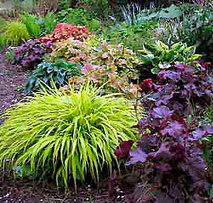 shade gardenHeucheras Tiarellas Foxglove Woodland Phlox ferns