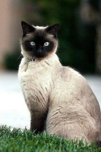 Pin Von Anna Blackthorn Auf Cats Katzen Wilde Katzen Susse Tiere