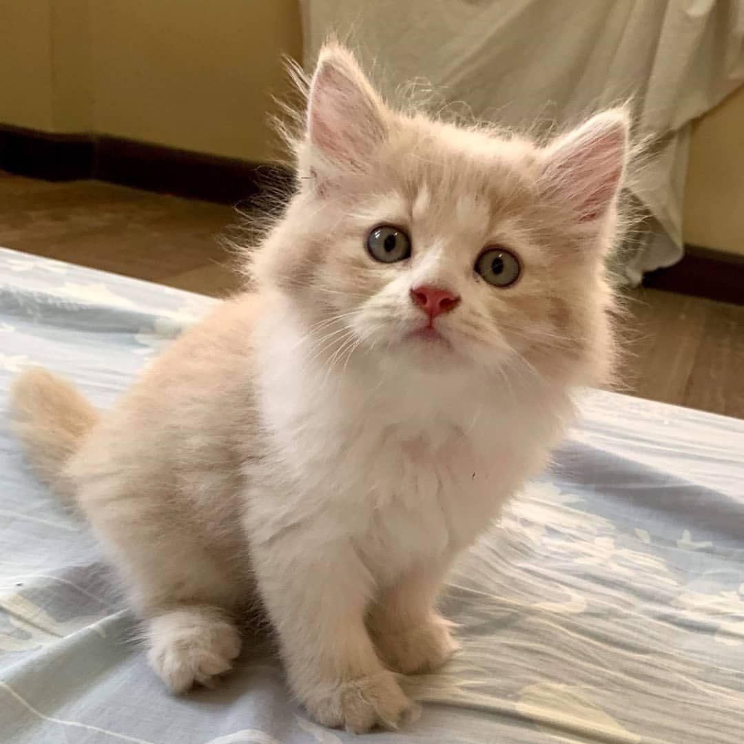 ก งฟ แมวเอ อ แมว แมวโง ก งฟ แมวน าร ก Cat Kungfu123 Cat แมวน าร ก แมว แมวตลก