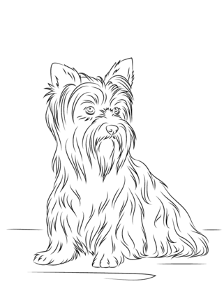 Yorkshire Terrier Coloring Page Dog Coloring Page Yorkshire Terrier Puppy Coloring Pages
