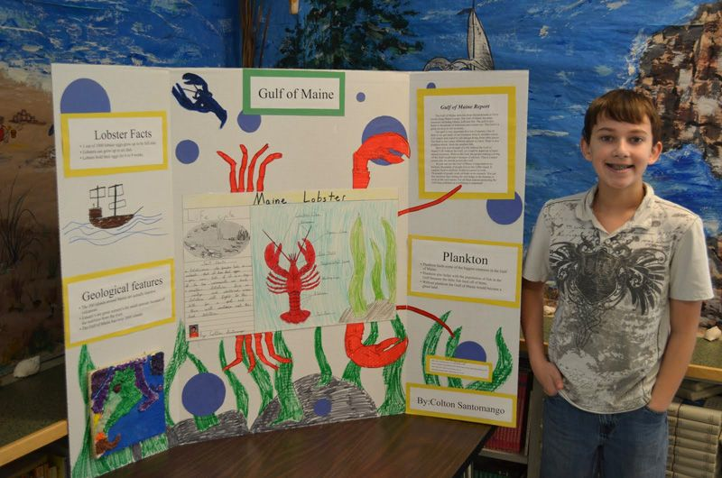 Ocean Ecosystem Poster Board Google Search Project