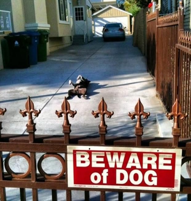 Funny Beware Of Dogs Signs Beware Of Dog Funny Animal Pictures