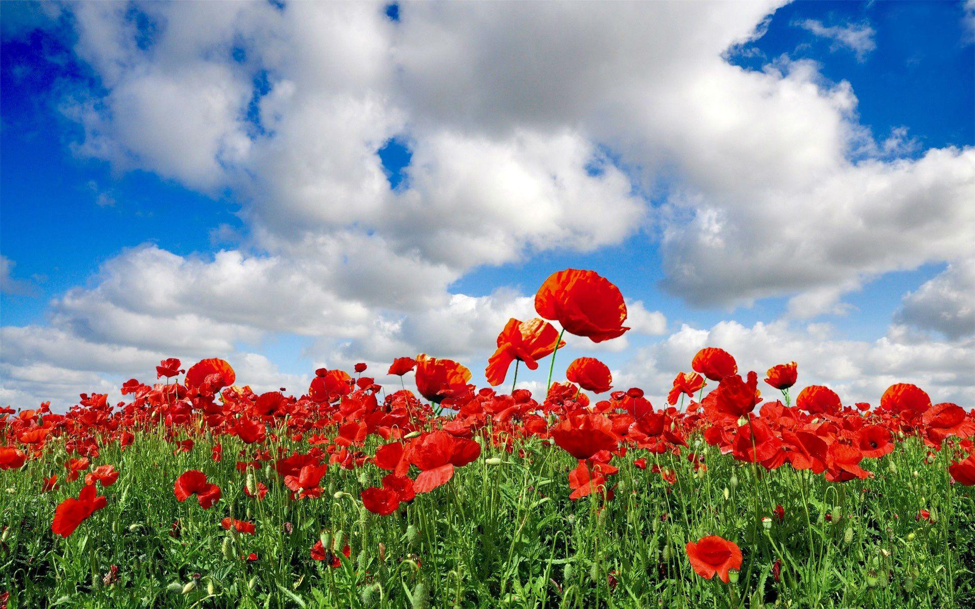 Beautiful Flowers Fields Wallpapers Hd Pictures Field Wallpaper Flower Field Poppy Wallpaper