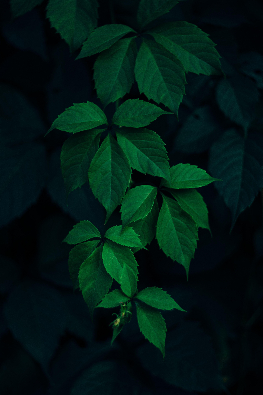 Tres Belles Feuilles D Une Plante Si Vous Savez De Quelle Plante Il S Agit N Hesitez Pas A Laisser Un Fond D Ecran Vert Fond D Ecran Colore Papier Peint Vert