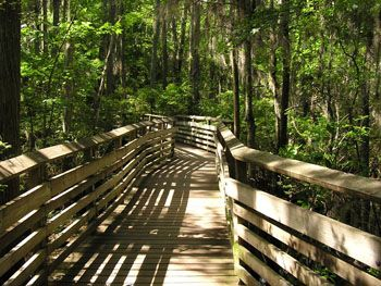 Best Family Friendly Hikes Bald Cypress Trail First