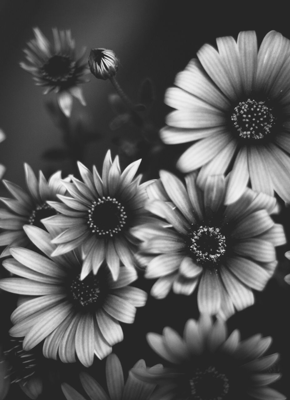 Pin By Ian On 雏菊 Black And White Flowers Sunflower Wallpaper Beautiful Flowers