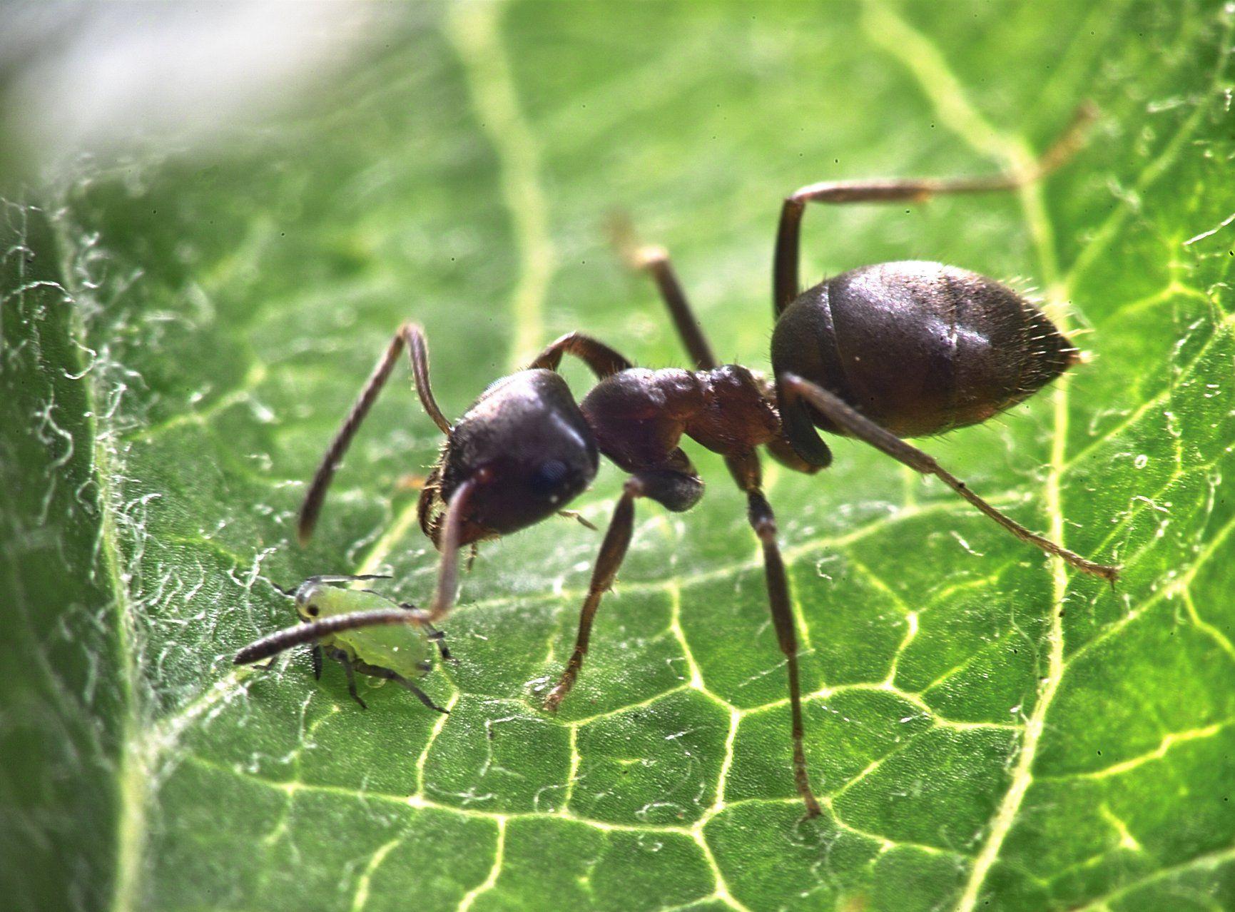 Comment Éloigner Les Fourmis Naturellement Épinglé sur insectes