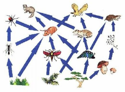 Food Chain Connections