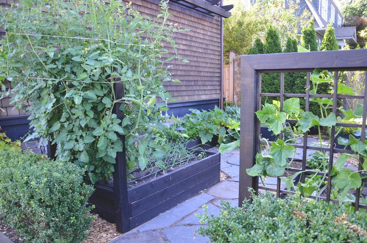 Kitchen Garden Design/Build by Seattle Urban Farm Company Lyon - Garden Design Company