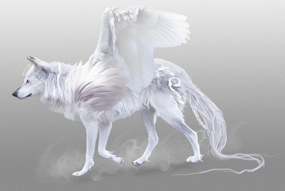 Волк белый ангел картинка