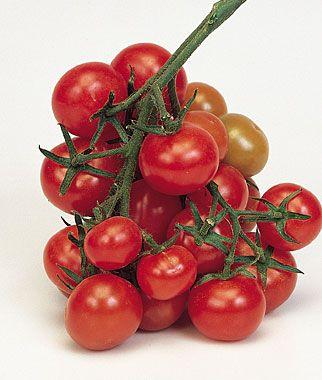 Christmas Grapes Tomato Seeds And Plants Vegetable 400 x 300