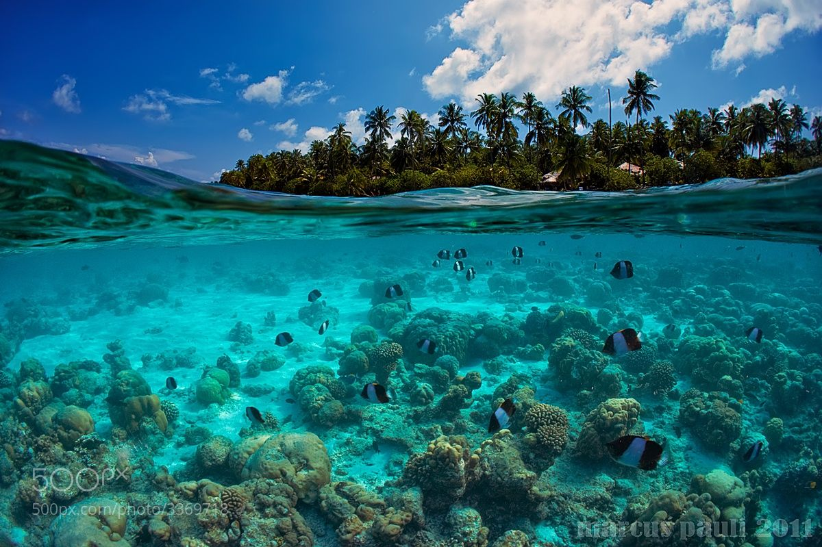 Island By Marcus Pauli On 500px Com Beautiful Beach Pictures Underwater Photography Underwater Pictures