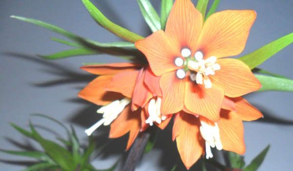 10 plantes répulsives pour le jardin | Plante, Planter de ...