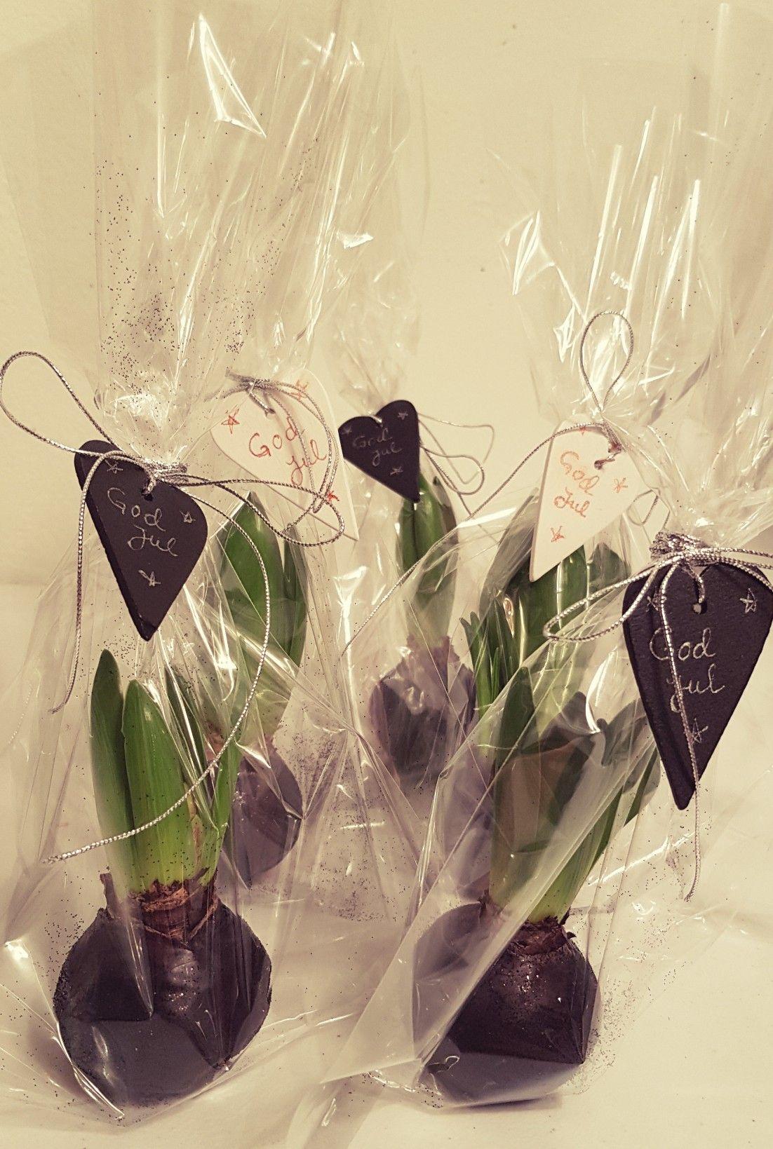Gi Room Design: Svibel (Hyacinth) Med Voks Og Glitter. Pakket Inn I